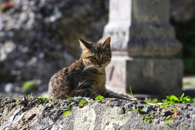 Cat in Centro Storico
